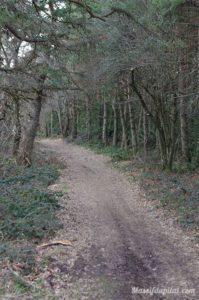 Chemin de la Crête dans le bois entre Rochetaillée et Saint-Etienne