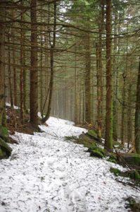 Chemin forestier depuis le crêt de la Perdrix en direction du moulin du Bost