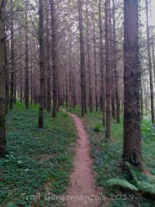 Photo du trail Gargomançois 6 Octobre 2019 - Parcours 19 km - Passage dans la Forêt