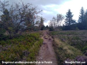 Bruyères et airelliers près du Crêt de la Perdrix