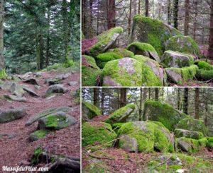 Balade dans la Forêt entre Prélager et le Crêt de Chaussitre
