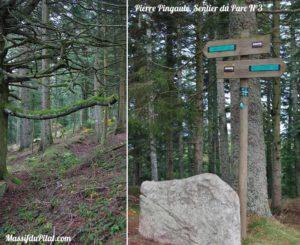 Chemin vers la Pierre Pingaule, Sentier 3 du Parc du Pilat