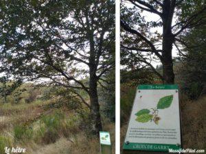 Parc botanique de la Croix de Garry à Saint-Genest-Malifaux