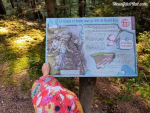 Balade enfant dans Le Pilat, à la découverte du réseaux de drains dans la forêt du Grand Bois