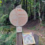 Balade enfant dans le Pilat sur les ruines de la Forêt des Grands Bois.