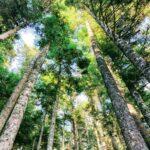 Forêt des Grands Bois dans le Pilat entre Tarentaise et Le Bessat