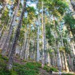 Forêt dans le Grand Bois du Pilat à Tarentaise sur le sentier enfant de la devinette