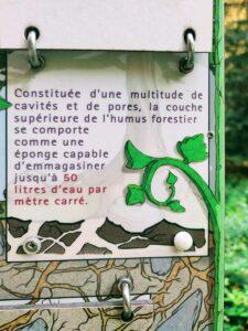 L'humus de la Forêt, une éponge stockant jusqu'à 50 litres d'eau par mètre carré