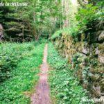 Sur le sentier de la devinette dans la forêt du Grand Bois entre Tarentaise et Le Bessat