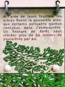 La forêt un dépolluant naturel
