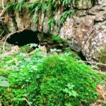 Arche en pierre dans une ruine de la Forêt du Grand Bois du Pilat