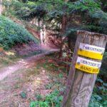 Sentier du Grand Bois à Tarentaise dans le Pilat