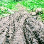 Trace de VTT sur le sentier dans le Grand Bois du Pilat
